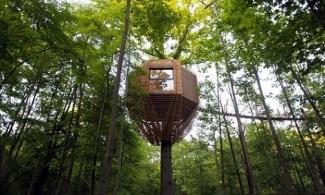 Casa-na-árvore-moderna
