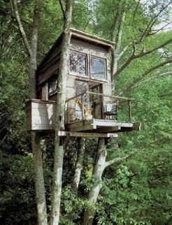 Casa-na-árvore-pequena